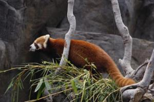 A redesigned Firefox is on the way. No, not this firefox.  Reuters