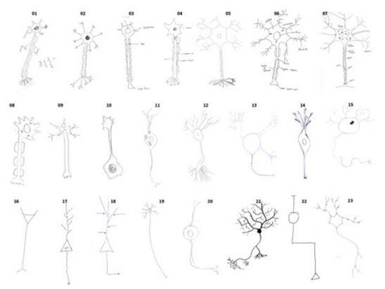 neuron%20drawings-thumb-650x489-123289[1]